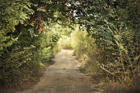 green alley with rural footpath Stock Photo - Budget Royalty-Free & Subscription, Code: 400-05878289