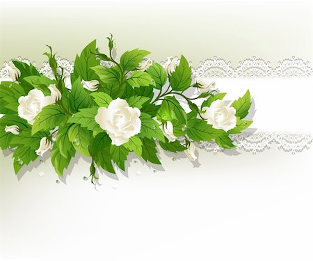 sparks with white background - Beautiful background with fresh white roses. Stock Photo - Budget Royalty-Free & Subscription, Code: 400-05906415