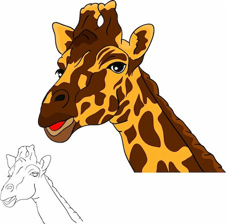 vector - portrait, giraffe head isolated on white background Stock Photo - Budget Royalty-Free & Subscription, Code: 400-05906529