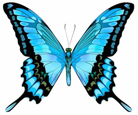 Beautiful vector isolated blue butterfly Stock Photo - Budget Royalty-Free & Subscription, Code: 400-05902904