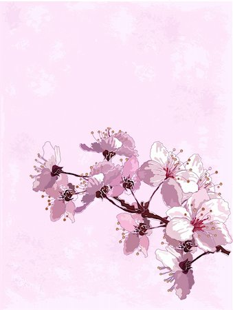 Spring  background with cherry blossom Stock Photo - Budget Royalty-Free & Subscription, Code: 400-05919373