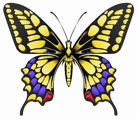 vector illustration of big yellow machaon butterfly isolated on white Stock Photo - Budget Royalty-Free & Subscription, Code: 400-05920390