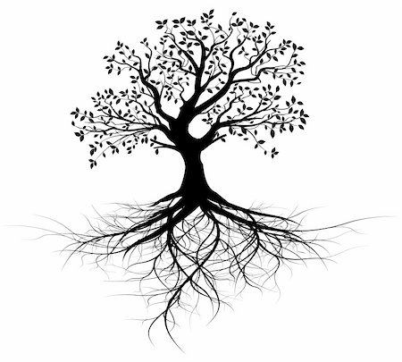 whole black tree with roots isolated white background vector Stock Photo - Budget Royalty-Free & Subscription, Code: 400-05920924