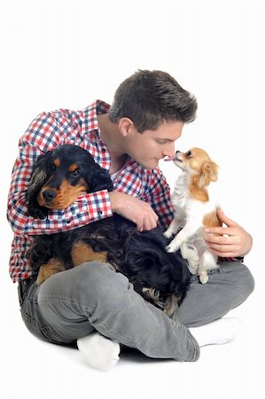 dog kissing man - portrait of a  purebred english cocker, chihuahua and man in a studio Stock Photo - Budget Royalty-Free & Subscription, Code: 400-06066477