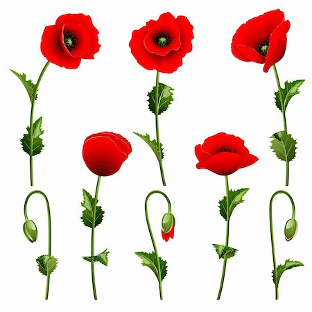 Set from red poppies on the white background Stock Photo - Budget Royalty-Free & Subscription, Code: 400-06069358