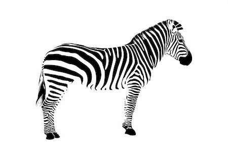 Animal illustration of vector zebra silhouette Stock Photo - Budget Royalty-Free & Subscription, Code: 400-06079597