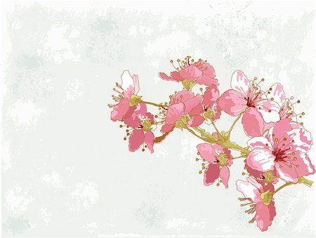 Spring  background with cherry blossom Stock Photo - Budget Royalty-Free & Subscription, Code: 400-06070283