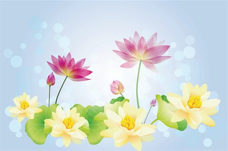 simsearch:400-04367218,k - Lotus water lilies - Illustration Stock Photo - Budget Royalty-Free & Subscription, Code: 400-06080394