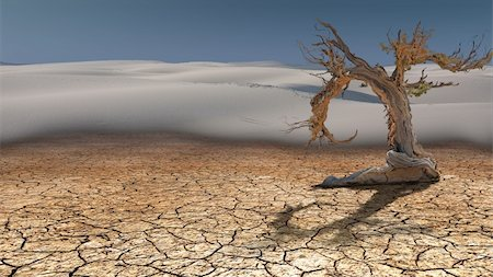 rolffimages (artist) - Dead Tree in Desert Stock Photo - Budget Royalty-Free & Subscription, Code: 400-06081150