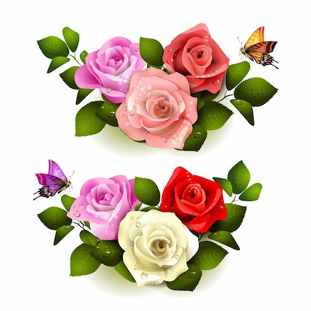 Roses with butterflies on white background Stock Photo - Budget Royalty-Free & Subscription, Code: 400-06082389
