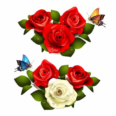 Roses with butterflies on white background Stock Photo - Budget Royalty-Free & Subscription, Code: 400-06082415