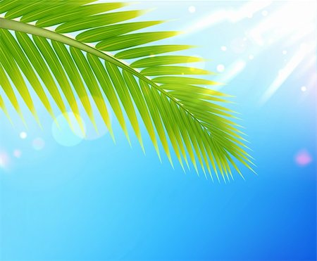 Vector illustration of tropical summer background palm tree leaf Stock Photo - Budget Royalty-Free & Subscription, Code: 400-06095877