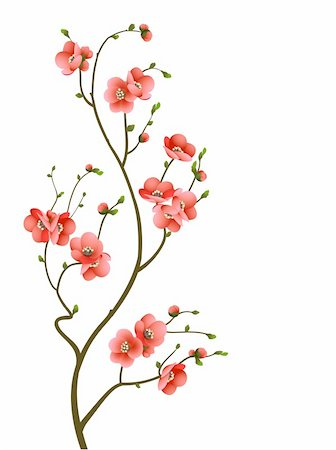 abstract background with cherry blossom branch isolated Stock Photo - Budget Royalty-Free & Subscription, Code: 400-06098617
