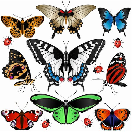 Vector of Collection of many butterflies and ladybugs Stock Photo - Budget Royalty-Free & Subscription, Code: 400-06107863