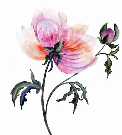 peonies graphics - Beautiful Peony flower, Watercolor painting Stock Photo - Budget Royalty-Free & Subscription, Code: 400-06108604