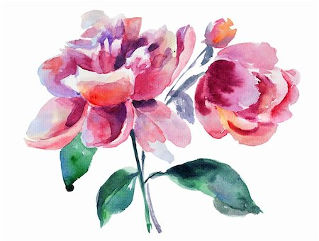 peonies graphics - Beautiful Peony flower, Watercolor painting Stock Photo - Budget Royalty-Free & Subscription, Code: 400-06108605