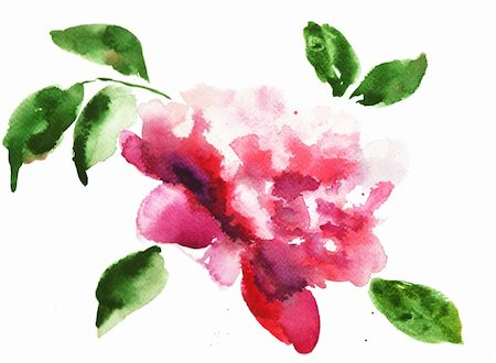 peonies graphics - Watercolor illustration of Beautiful peony flowers Stock Photo - Budget Royalty-Free & Subscription, Code: 400-06101582