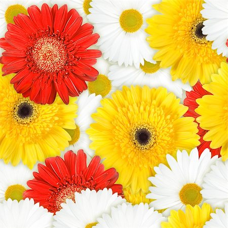 flores - Abstract background of red, yellow and white flowers. Seamless pattern for your design. Close-up. Studio photography. Stock Photo - Budget Royalty-Free & Subscription, Code: 400-06101963