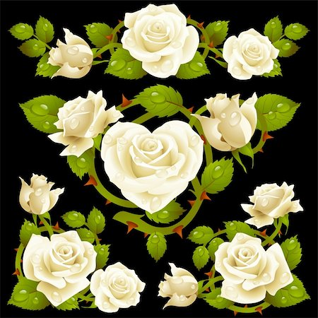 White Rose design elements Stock Photo - Budget Royalty-Free & Subscription, Code: 400-06103939