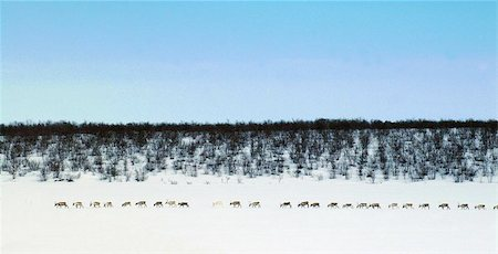 Reindeer row Stock Photo - Budget Royalty-Free & Subscription, Code: 400-06129238