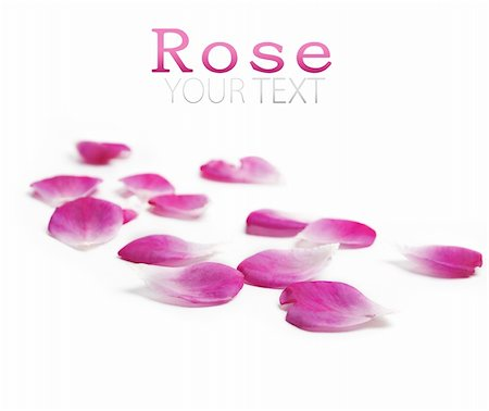 Pink rose petals over white background Stock Photo - Budget Royalty-Free & Subscription, Code: 400-06138138