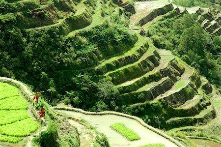 philippine terrace farming - Banaue rice terraces Stock Photo - Budget Royalty-Free & Subscription, Code: 400-06144374