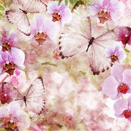 Butterflies and orchids flowers pink background ( 1 of set) Stock Photo - Budget Royalty-Free & Subscription, Code: 400-06141095