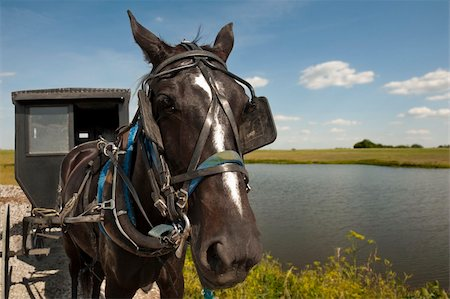 rural gas station - An Amish horse and buggy traveling a gravel road pass by a pond and open field on a sunny day Stock Photo - Budget Royalty-Free & Subscription, Code: 400-06141588