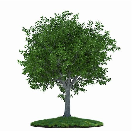 3d render of beautiful tree with green field. Isolated on white background Stock Photo - Budget Royalty-Free & Subscription, Code: 400-06141839