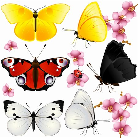 Collection of butterflies with open wings and from one side Stock Photo - Budget Royalty-Free & Subscription, Code: 400-06177000