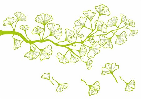 ginkgo tree branch with green leaves, vector background Stock Photo - Budget Royalty-Free & Subscription, Code: 400-06178453