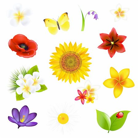 Big Flowers And Leaf Set, Vector Illustration Stock Photo - Budget Royalty-Free & Subscription, Code: 400-06171823