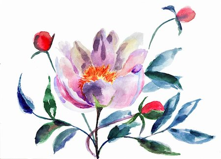 peony art - Original Peony flowers, Watercolor illustration Stock Photo - Budget Royalty-Free & Subscription, Code: 400-06202751