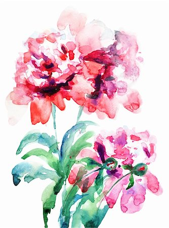 peonies graphics - Watercolor illustration of Beautiful peony flowers Stock Photo - Budget Royalty-Free & Subscription, Code: 400-06202780