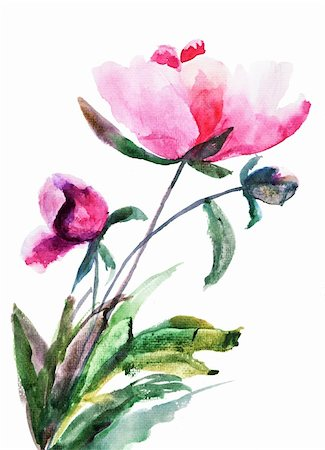 peonies graphics - Spring Peony flowers, Watercolor illustration Stock Photo - Budget Royalty-Free & Subscription, Code: 400-06202781