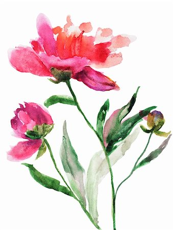 peonies graphics - Watercolor illustration of Beautiful peony flowers Stock Photo - Budget Royalty-Free & Subscription, Code: 400-06202782