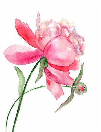 peony illustrations - Beautiful Peony flower, Watercolor painting Stock Photo - Budget Royalty-Free & Subscription, Code: 400-06384724