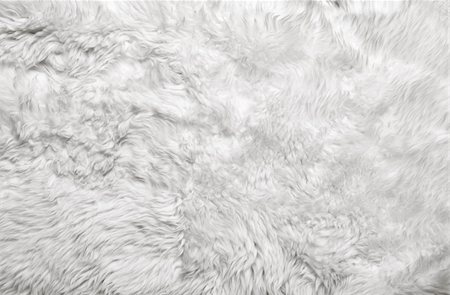 White fur background. Close up Stock Photo - Budget Royalty-Free & Subscription, Code: 400-06388834
