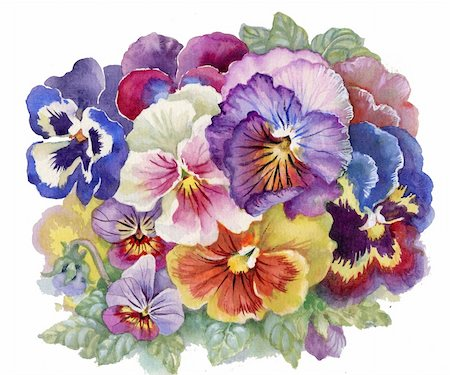 Viola Tricolor: watercolor flower, bouquet flower, illustration Stock Photo - Budget Royalty-Free & Subscription, Code: 400-06395086