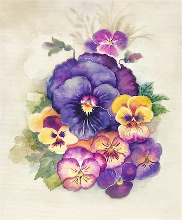 Watercolor Flora Collection: Viola Tricolor  decoration, bouquet of flower Stock Photo - Budget Royalty-Free & Subscription, Code: 400-06395101