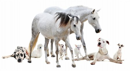 group of white pet in front of white background Stock Photo - Budget Royalty-Free & Subscription, Code: 400-06391487