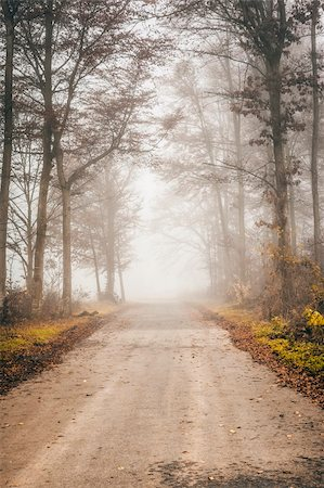 An image of a beautiful forest with fog in bavaria germany Stock Photo - Budget Royalty-Free & Subscription, Code: 400-06424599