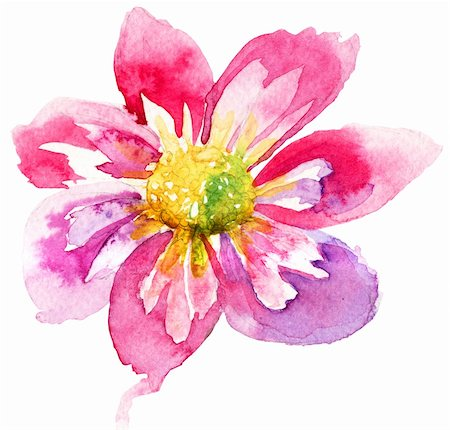 Beautiful Pink flower, Watercolor painting Stock Photo - Budget Royalty-Free & Subscription, Code: 400-06420600