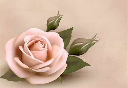 Retro background with beautiful pink rose with buds. Vector illustration. Stock Photo - Budget Royalty-Free & Subscription, Code: 400-06485072