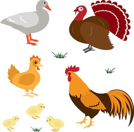 Farm birds vector set isolated on white Stock Photo - Budget Royalty-Free & Subscription, Code: 400-06557674
