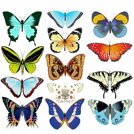 Various beautiful butterflies. An illustration on a white background. Stock Photo - Budget Royalty-Free & Subscription, Code: 400-06553818
