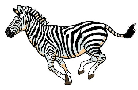zebra,equus burchell,side view picture isolated on white background Stock Photo - Budget Royalty-Free & Subscription, Code: 400-06629203