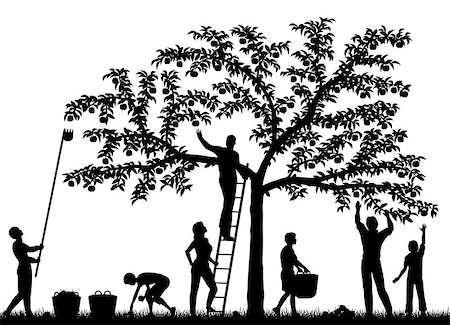 family apple orchard - Editable vector silhouettes of a family harvesting apples from a tree with people and fruit as separate objects Stock Photo - Budget Royalty-Free & Subscription, Code: 400-06686456