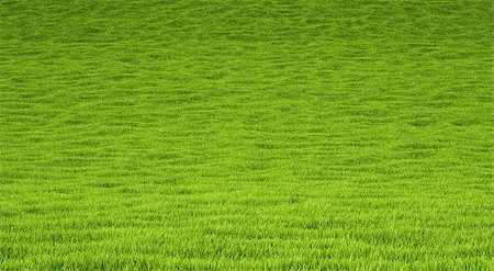 landscape is covered with green grass. Stock Photo - Budget Royalty-Free & Subscription, Code: 400-06736923