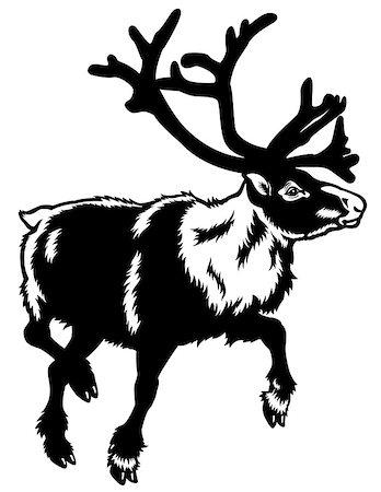 caribou reindeer,rangifer tarandus,animal of arctic,black white illustration Stock Photo - Budget Royalty-Free & Subscription, Code: 400-06746021